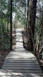 The Bike Trail