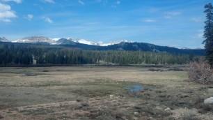 Meadow III