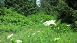 Trail Coastal Oregon