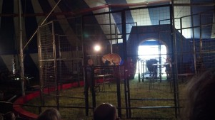 Cat Show at the Culpepper & Merriweather Circus