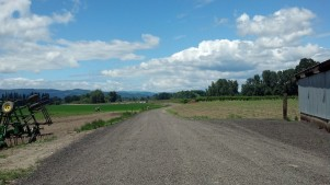 Road on Sauvie Island