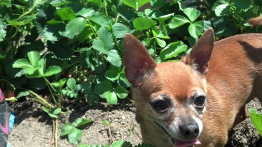 Olivia's Little Dog